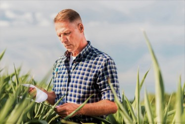 [noticia: projeto-agronomia-traz-beneficios-para-profissionais] Projeto Agronomia: diferentes cédulas rurais e diferentes safras podem ser registradas em uma mesma ART (Foto: Freepik.com) - PROJETO_AGRONOMIA_CREA-GO.jpg